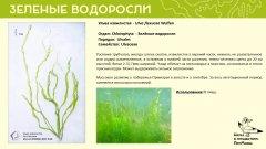 chlorophyta_04.jpg