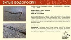 ochrophyta_003.jpg