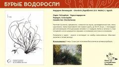 ochrophyta_008.jpg