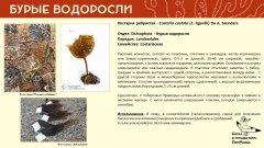 ochrophyta_010.jpg