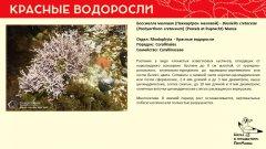 rhodophyta_007.jpg