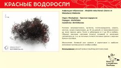 rhodophyta_008.jpg