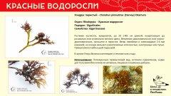 rhodophyta_012.jpg