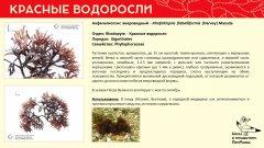 rhodophyta_021.jpg